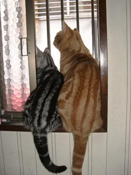 Cat2010817_001_2