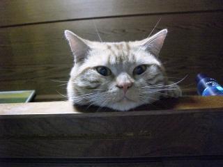 Cat2010817_005