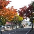 紅葉 ストリート