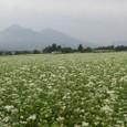 そば畑と磐梯山